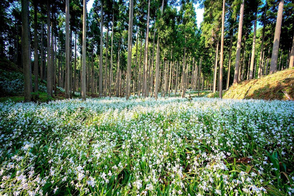 Shaga Forest (Ayabe) 1