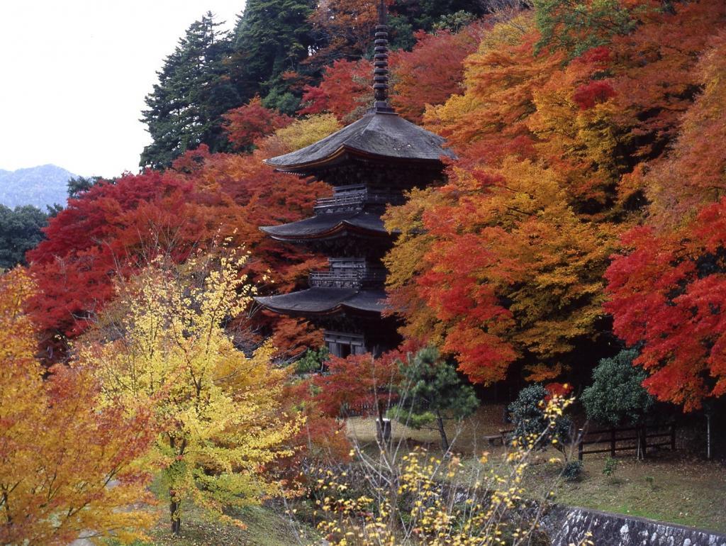 Kongo-in Three-storied Pagoda 1