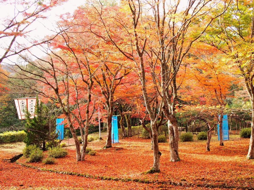 Yamaga maple Festival