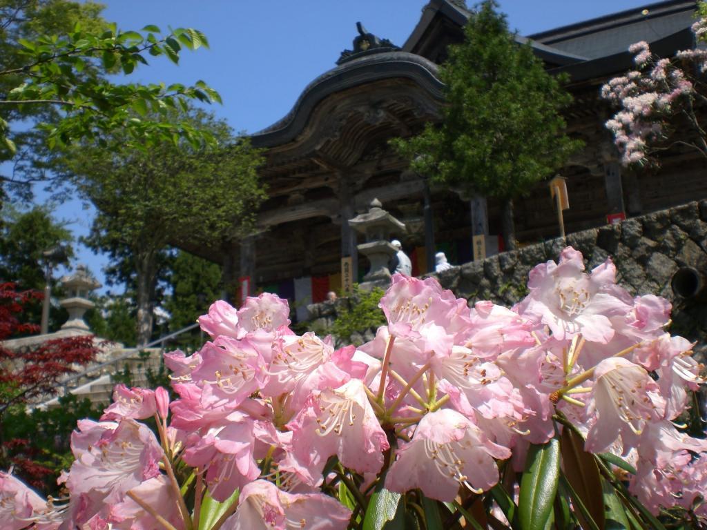 Nariaiji Temple shakunage