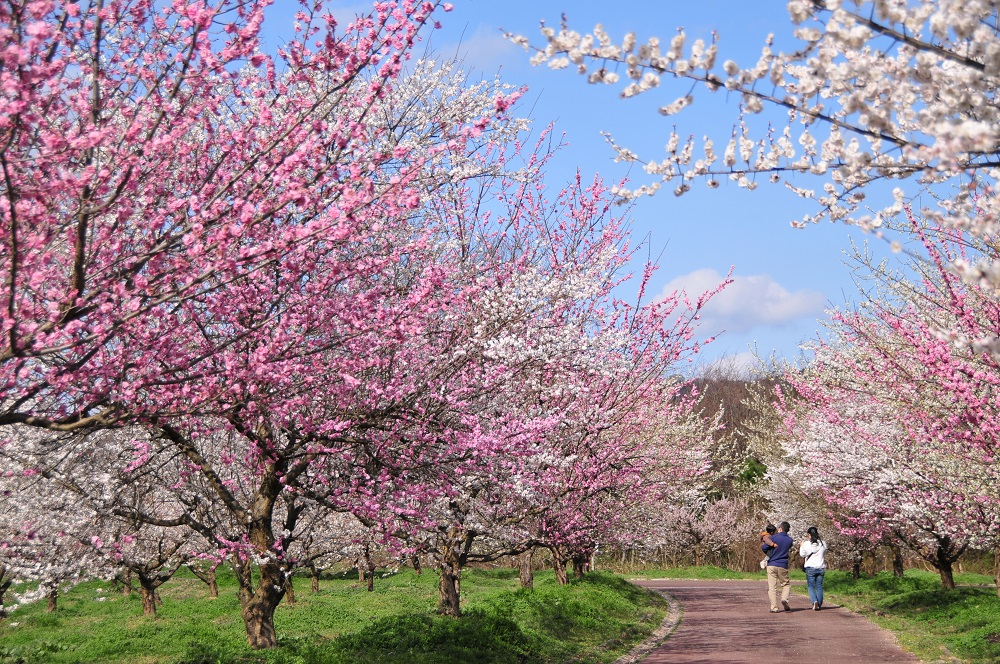 Bairin, Ayabe-shi Park