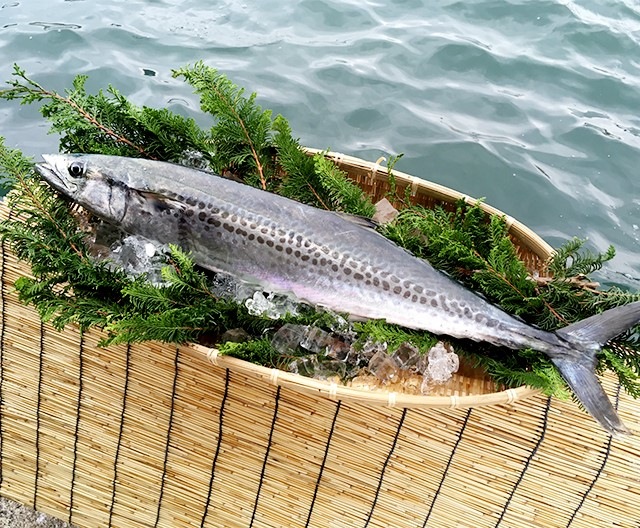 Spanish mackerel (Kyoto Spanish mackerel)